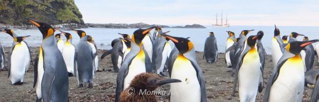 Fliegende Pinguine