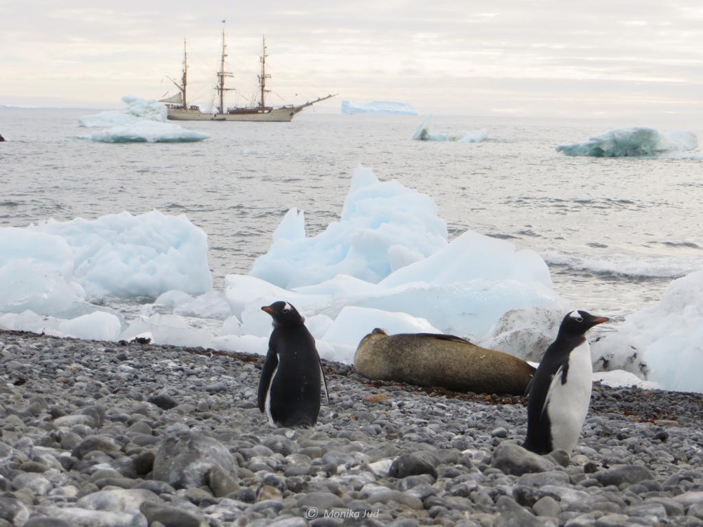 Pinguine und Pelzrobben - Bark Europa im Hintergund