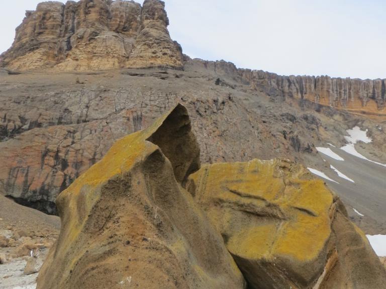 Brown Bluff - seltenes Gestein