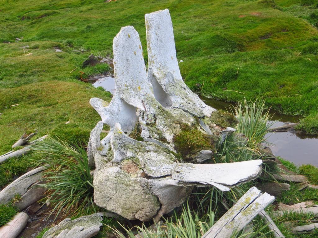Walfischwirbel und Knochen finden sich hier überall in den Buchten
