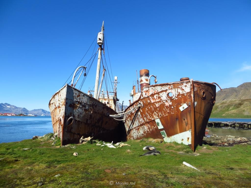 die Wracks der alten Walfangbucht Grytviken